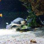 Photo de Nausicaa, Centre National de la Mer