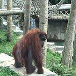 Foto de Audubon Zoo