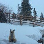 Fox just staring at me