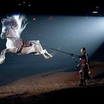 A Pure Spanish Horse performs the Capriole during the tournament at Medieval Times.