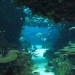 Photo de Lisbon Oceanarium