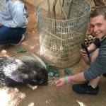Porcupine encounter