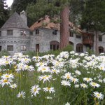 Beautiful flowers at the Vikingsholm castle in Emerald Bay