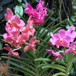 Photo de National Orchid Garden