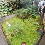 Subarctic Plant House