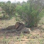 leoni, safari Tsavo est