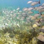 Foto de Ocean Coral & Turquesa