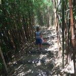 WC cachés parmi les bambous