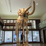 Photo de Musee d'histoire naturelle de Nantes
