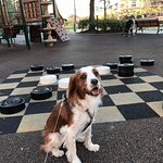 Casey challenged a few people to a game of checkers!