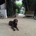 Ganesh the friendly dog
