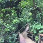 Walk way up to Treehouse