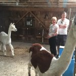 Cutest animals ever! My Mom & my hubby at the alpaca plantation. So darling!