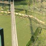 Foto de Gators and Friends - Alligator Park & Exotic Zoo