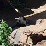 Foto di San Diego Zoo
