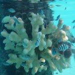 Foto di InterContinental Bora Bora Resort & Thalasso Spa