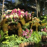 "Orchid-covered thai ""elephant"""