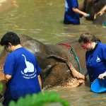 Giving our elephant a bath!