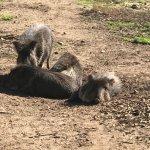 San Francisco Zoo Foto
