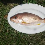 Ristorante Rimini & Bungalow (Fish restaurant and seafood)