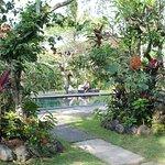 Pool view through beautiful gardens