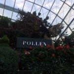 Photo of POLLEN