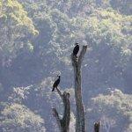 birds on the tree