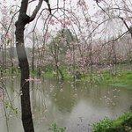 武漢東湖櫻花公園