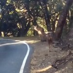 Baby deer on the way to Upper Bhavani