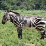 Photo de Mountain Zebra National Park