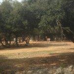 Photo of Parc Zoologique Henri de Lunaret