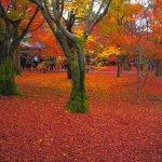 Photo de Tofuku-ji Temple