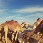 Abu Dhabi Desert Safari -Day Tours