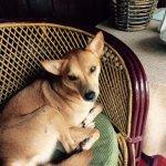 Our dog companion!