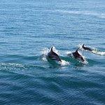 les dauphins étaient au rendez-vous