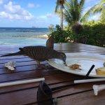 des oiseaux gourmands