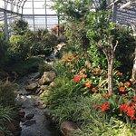 Photo of Duthie Park Winter Gardens