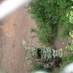 Foto de Santuario Animal de Cochahuasi