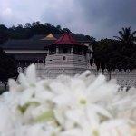 Zahntempel (Sri Dalada Maligawa) Foto