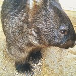 Photo of Ballarat Wildlife Park