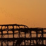 Birds roosting on West Pier at sunset