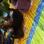Photo de Foundation Jaguar Rescue Center