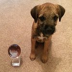 The newest member of our team starts her training.