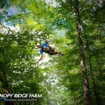 Hand trimmed trees = a totally immersive forest experience at Canopy Ridge Farm