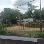 Artis Zoo Foto