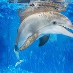 Clearwater Marine Aquarium - Hello Winter