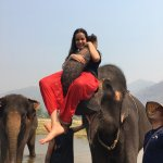 The elephants are so friendly!