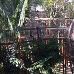 Foto de The Jungle Place - Tours