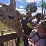Safari - Busch Gardens