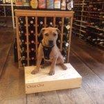 Tucker The Shop Dog